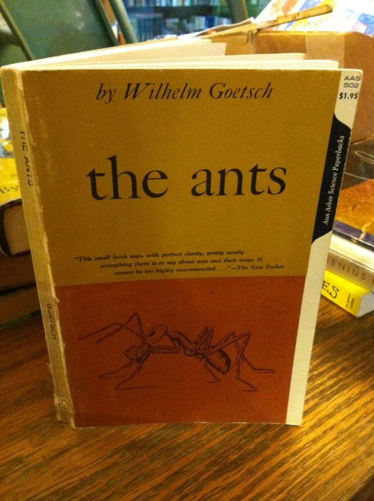 Image for The Ants